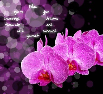Orchid message