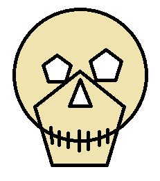 Skull of a normal bar customer